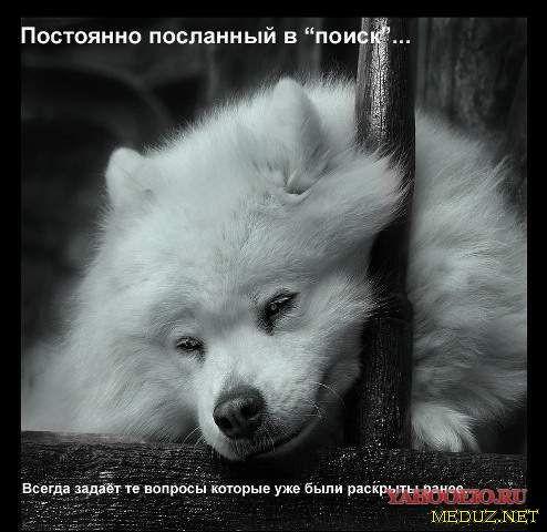 1202891457_meduz_net08.jpg