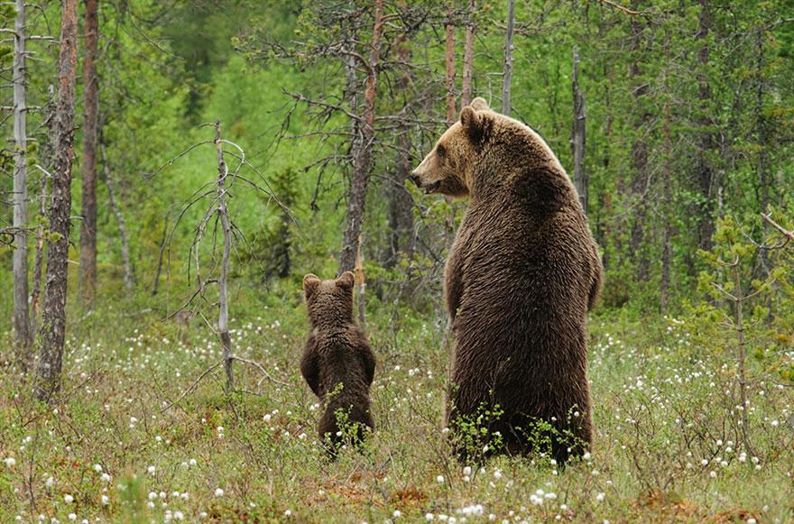 Medvedi_animal-parents-32.jpg