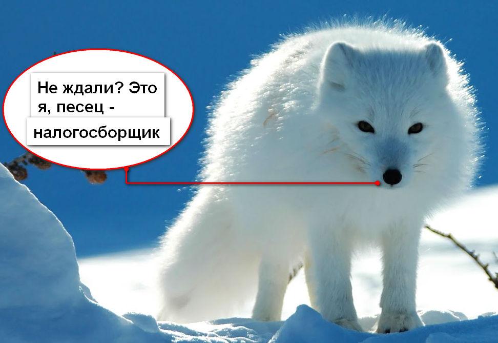 pipec_-nalogosborchic-imho.jpg